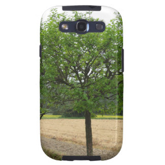 Fruit trees with green leaves in spring galaxy SIII case