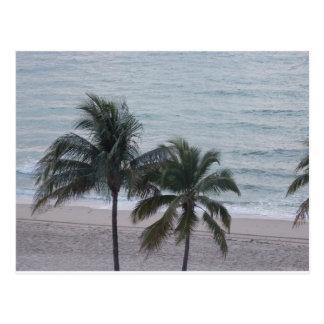 Ft. Lauderdale Palm Trees Postcard