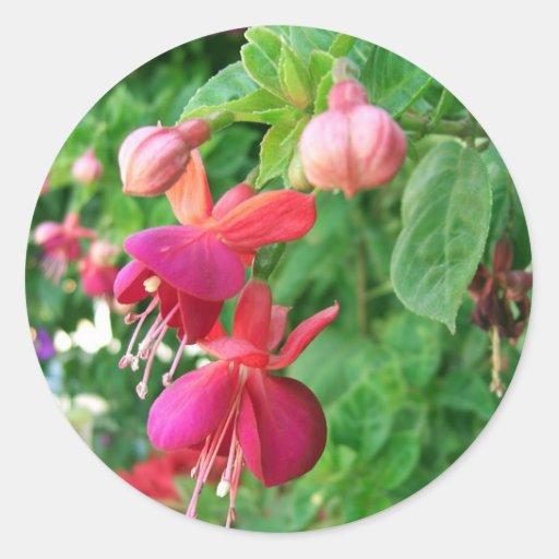 Fuchsia 5 stickers