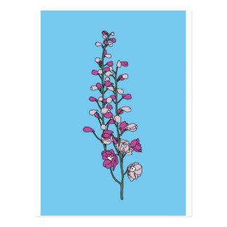 Fuchsia Blossom Postcard