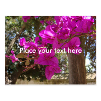 Fuchsia Flower branch Customized Postcard