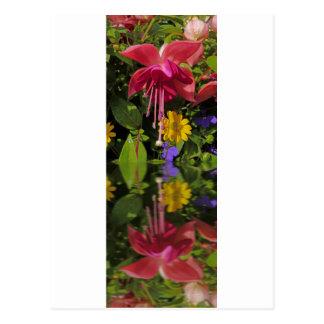 Fuchsia  flower in reflection postcard