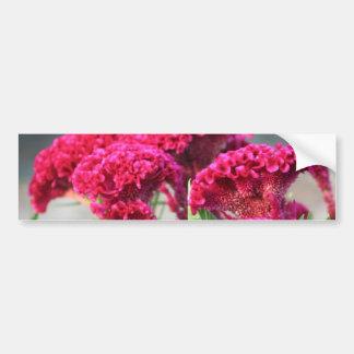 Fuchsia Flowers Bumper Sticker