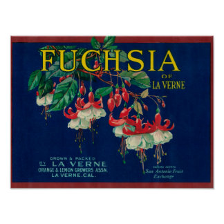 Fuchsia Lemon LabelLa Verne, CA Poster