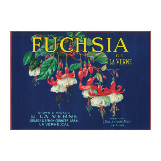 Fuchsia Lemon LabelLa Verne, CA Stretched Canvas Print