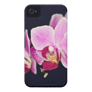 Fuchsia Pink Orchid iPhone 4 Covers