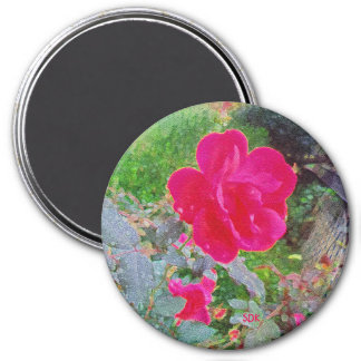 Fuchsia Pink Rose Flower in Bloom with Water Dew 7.5 Cm Round Magnet