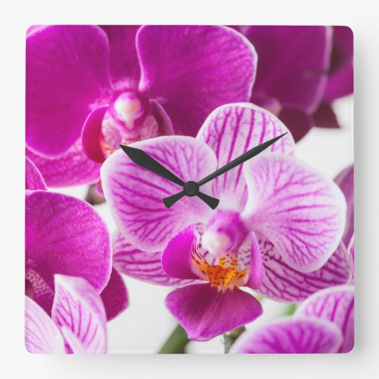 Fuchsia Pink White Dendrobium Orchid Flower Square Wall