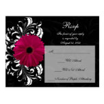Fuchsia Scroll Gerbera Daisy w/Black and White Post Cards