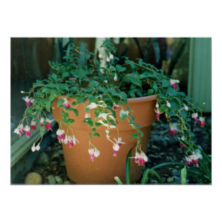"""Fuchsias in a Pot"" Poster"