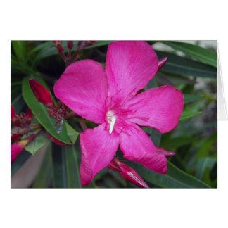 Fucshia Oleander Photo Greeting Card