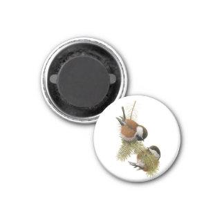 Fuertes' Chestnut-backed Chickadee 3 Cm Round Magnet