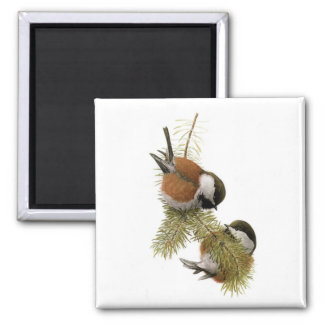 Fuertes' Chestnut-backed Chickadee Square Magnet