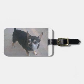 full 3 Chihuahua.png Luggage Tag