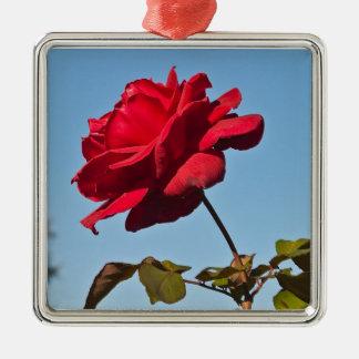 Full Bloom Rose at the Rose Bowl, Pasadena Califor Christmas Ornament