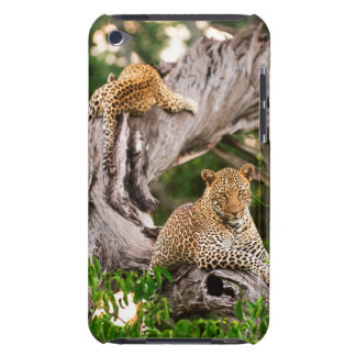Full Grown Leopard (Panthera Pardus) Cub iPod Case-Mate Case