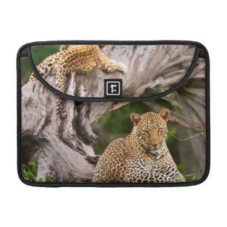 Full Grown Leopard (Panthera Pardus) Cub MacBook Pro Sleeves