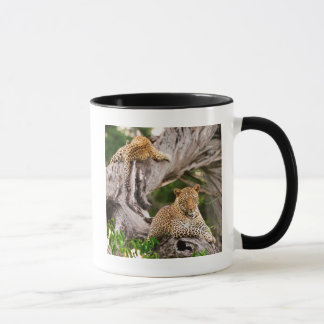 Full Grown Leopard (Panthera Pardus) Cub Mug