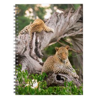 Full Grown Leopard (Panthera Pardus) Cub Notebooks