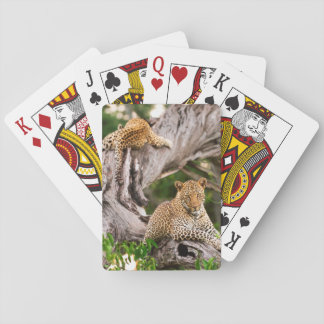 Full Grown Leopard (Panthera Pardus) Cub Playing Cards