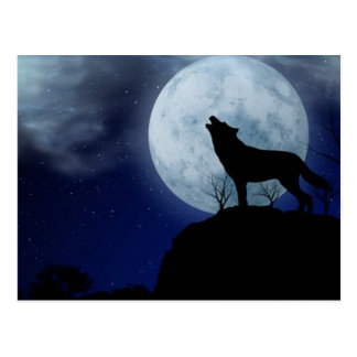 Full Moon Wolf Postcard