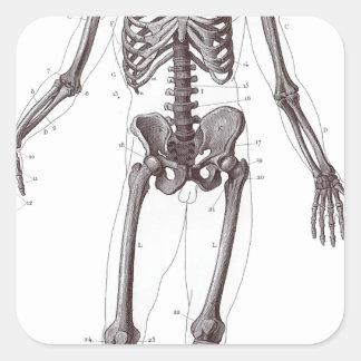 Full Skeleton Square Sticker