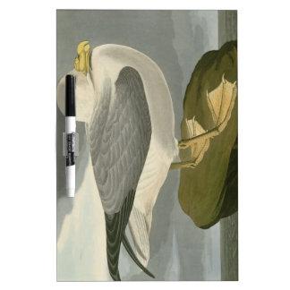 Fulmar Petrel Dry-Erase Boards