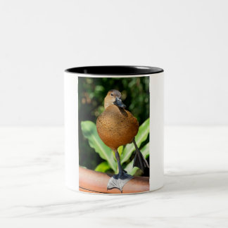 Fulvous Whistling Duck On Rail Two-Tone Coffee Mug