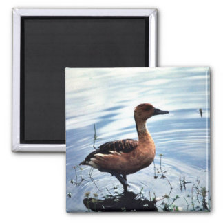 Fulvous Whistling Duck Square Magnet