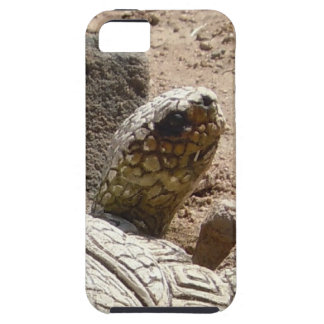 Fun American Southwest Desert Tortoise Herpetology iPhone 5 Cases