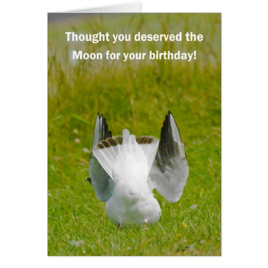 Fun Birthday Card - Mooning Seagull