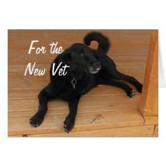 Fun Canine Vet Graduate Congratulations Graduation Card