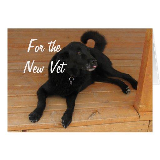 Fun Canine Vet Graduate Congratulations Graduation Cards