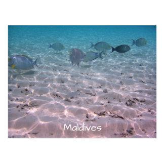 Fun Maldives Coral Fish White Sand Lagoon Postcard
