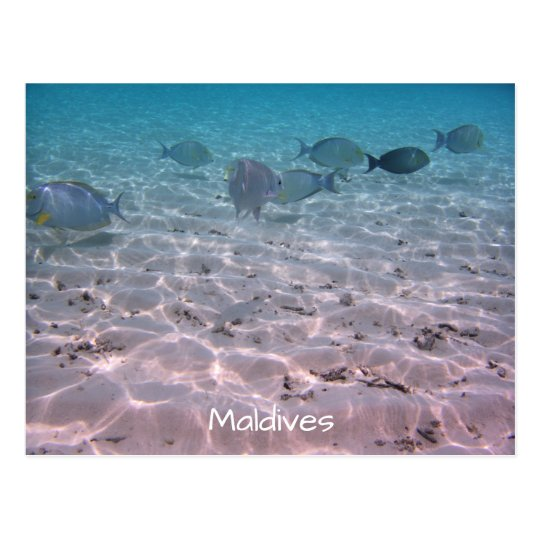 Fun Maldives Coral Fish White Sand Lagoon Postcard