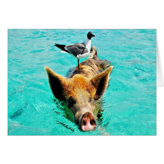 Fun together staniel cay swimming pig seagull fis cards