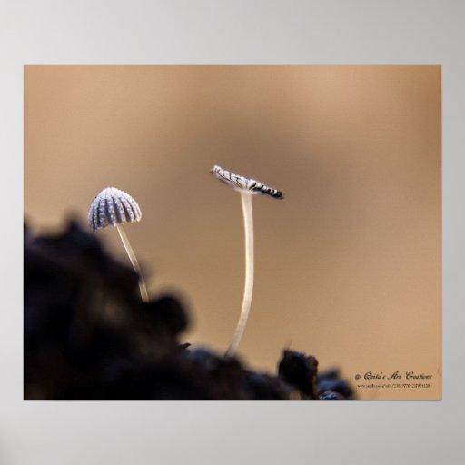 Fungi (Coprinus Plicatilis) Poster