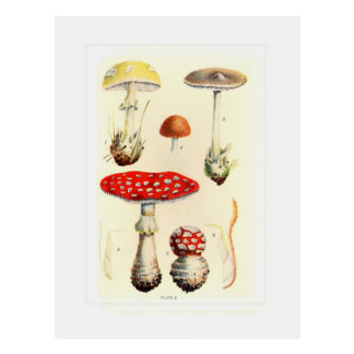 Fungi Post Cards