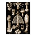 Fungi Postcards