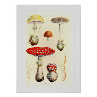 Fungi Print