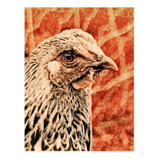 Funky Baby Chicken Silver Laced Wyandotte Pullet Postcard