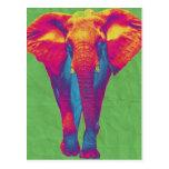 Funky elephant  2 postcard