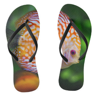 Funky flip flops fish