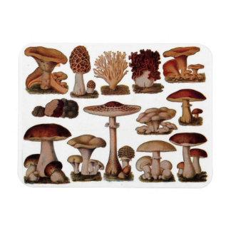 Funky Vintage mushrooms Magnet