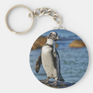 funny African Penguin, Boulders Beach Keychain
