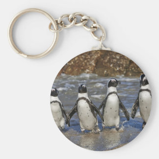 funny African Penguins, Cape Town Keychains
