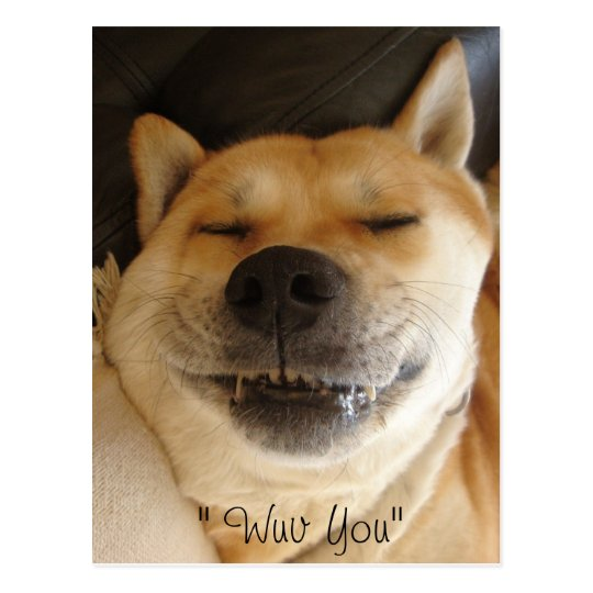 funny akita japanese type with cute smile love