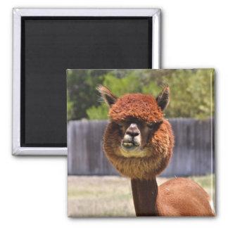 Funny Alpaca Magnet