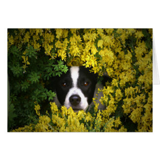 Funny and Cute Dog in the Flowers Birthday Card