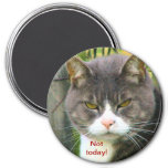 """Funny ANGRY CAT saying, """"NOT TODAY!"""" 7.5 Cm Round Magnet"""